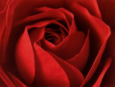 http://hesam2038.persiangig.com/image/bagh%20o%20padeshah/la-rose.jpg